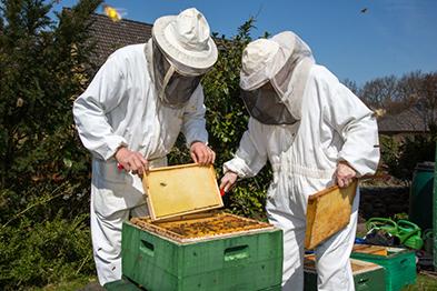 Beekeeper-Stakeholders-393x262