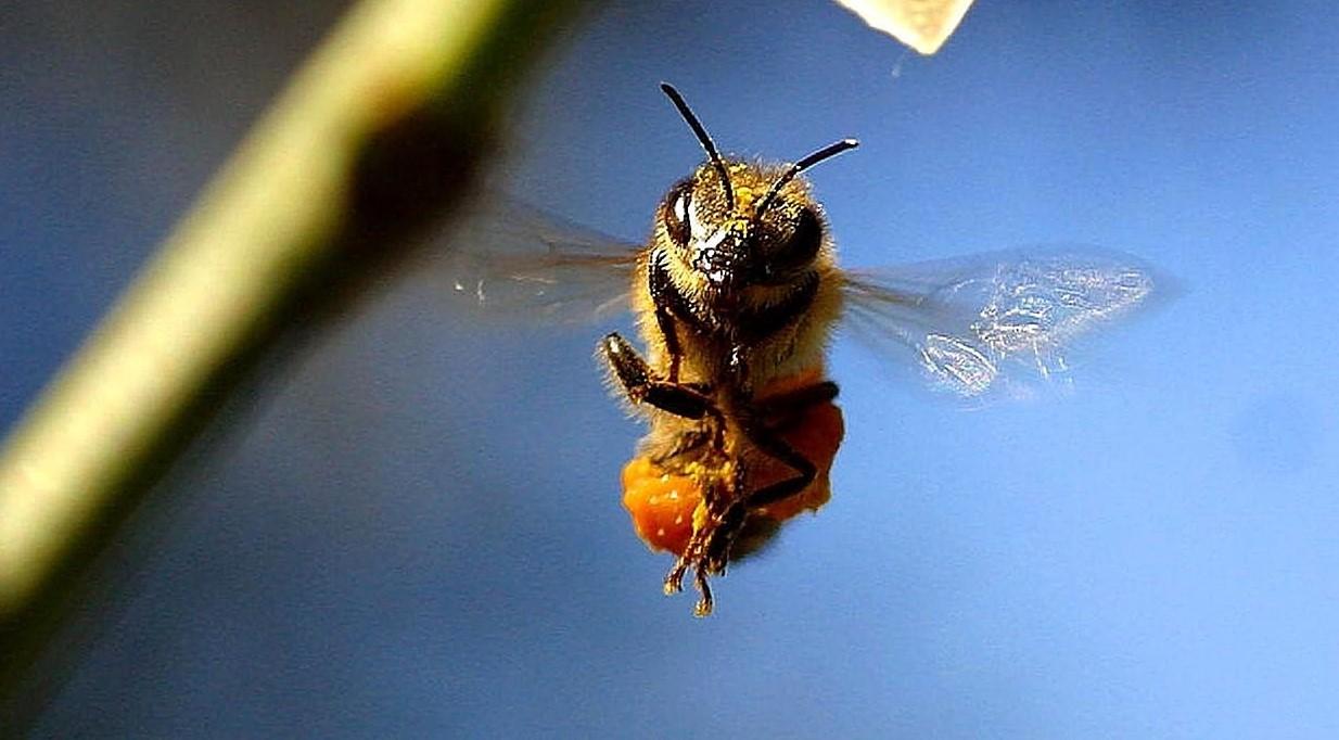 Фото карикатурное пчелы